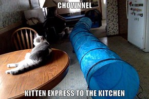 CHOWNNEL  KITTEN EXPRESS TO THE KITCHEN