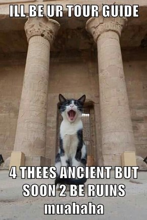 Cats Specialize In Anything Ruined!