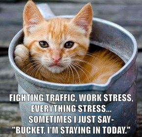 "FIGHTING TRAFFIC, WORK STRESS, EVERYTHING STRESS...                      SOMETIMES I JUST SAY-                                                            ""BUCKET, I'M STAYING IN TODAY."""