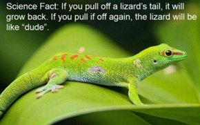 If You Pull A Lizard's Tail...