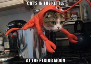 CAT'S IN THE KETTLE  AT THE PEKING MOON