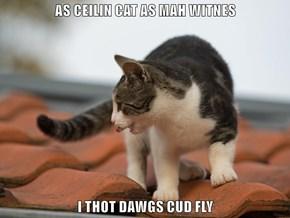 AS CEILIN CAT AS MAH WITNES  I THOT DAWGS CUD FLY