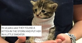 Kitten Found During Hurricane Matthew Becomes Twitter Famous Thanks to a Tube Sock