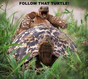 FOLLOW THAT TURTLE!
