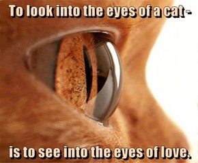 Go Ahead And Look In Your Cat's Eyes And You'll See Exactly What I'm Talking About.