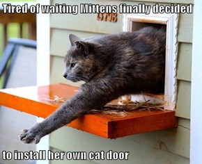 Tired of waiting Mittens finally decided   to install her own cat door
