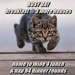 BUSY DAY                                  breakfast @ 3 more houses   home to mine 4 lunch                                         & nap b4 dinner rounds