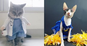 Tis the Season for Cats Reluctantly Wearing Costumes