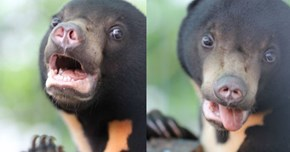 This Rescued Bear Cub Had the Silliest Photoshoot of All Time