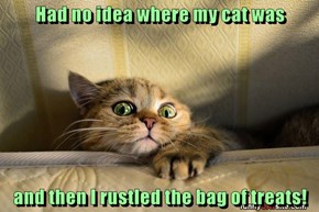 Had no idea where my cat was  and then I rustled the bag of treats!