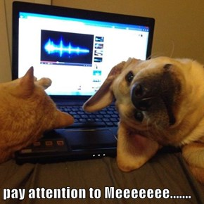 pay attention to Meeeeeee.......