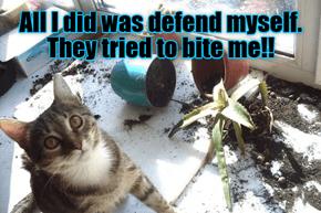 Poor kitteh...