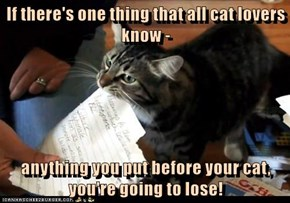 If there's one thing that all cat lovers know -  anything you put before your cat, you're going to lose!