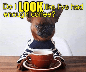 Do I look like I've had enough coffee?