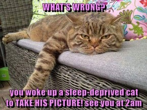 WHAT'S WRONG?  you woke up a sleep-deprived cat                     to TAKE HIS PICTURE! see you at 2am