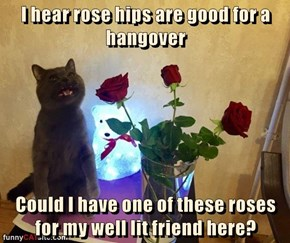 I hear rose hips are good for a hangover  Could I have one of these roses for my well lit friend here?