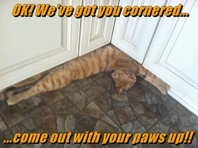OK! We've got you cornered...  ...come out with your paws up!!