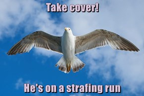 Take cover!  He's on a strafing run