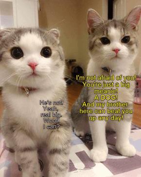 Who? Me?