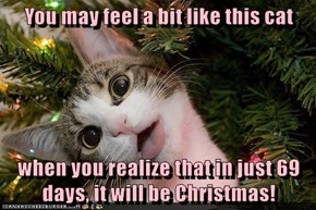 You may feel a bit like this cat  when you realize that in just 69 days, it will be Christmas!