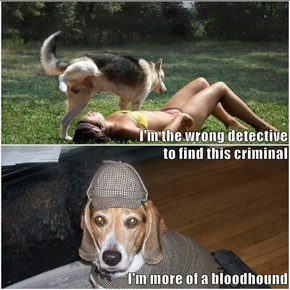 I'm the wrong detective                                                           to find this criminal I'm more of a bloodhound
