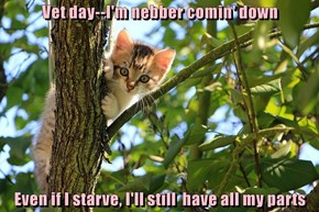 The Reason Cats Get Stuck In Trees