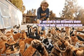 """Thank Goodness for All the """"Crazy"""" Cat Ladies!"""