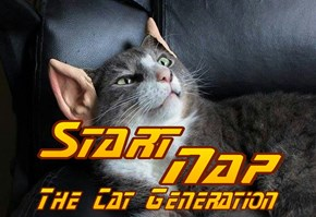 Start Nap: The Cat Generation