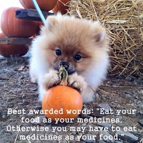 "Best awarded words: ""Eat your food as your medicines. Otherwise you may have to eat medicines as your food."""
