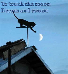 To touch the moon -- Dream and swoon