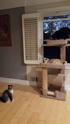 Stand off at the Cat Tree