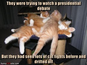 They were trying to watch a presidential debate  But they had seen lots of cat fights before and drifted off