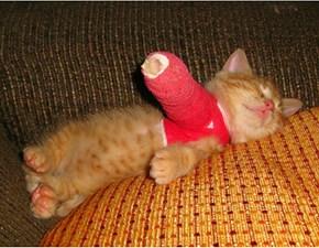 Borked Kitten is Borked