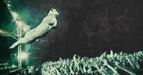 This New Zealand Lamb Flew Through the Air and Right Into a Photoshop Battle