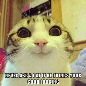 NEVER ASK A CAT IF HE THINKS YOUR GOOD LOOKING