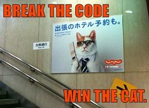 BREAK THE CODE  WIN THE CAT.