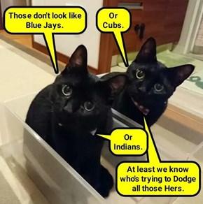 Cats think MLB names are batty (recaption: http://tinyurl.com/hxszp5u