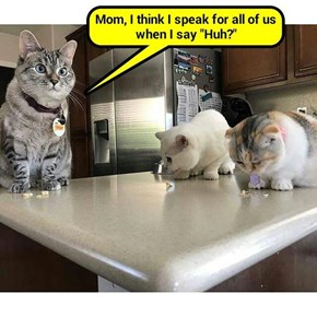 Cats vs UFOs - Unidentified Food Objects   (recaption: http://tinyurl.com/jsyqfld