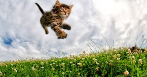 Photographer Captures Pouncing Kittens to Encourage More People to Adopt Cats