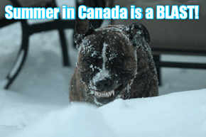 Canadian doggie has a happy!