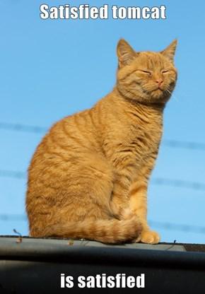 Satisfied tomcat  is satisfied