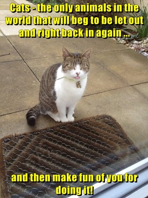 Cats - the only animals in the world that will beg to be let out and right back in again ...  and then make fun of you for doing it!