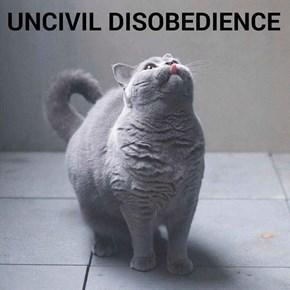 Uncivil disobedience (recaption: http://tinyurl.com/zd3qocr