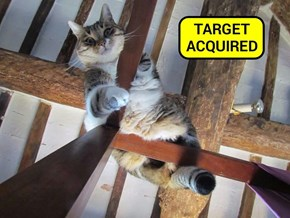 Target Acquired (recaption: http://tinyurl.com/gufx3cf