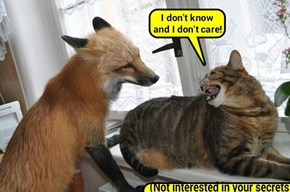 """What does the fox say?"" (recaption: http://tinyurl.com/zfsjcbk"