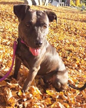 Fall Dog Loves Fall