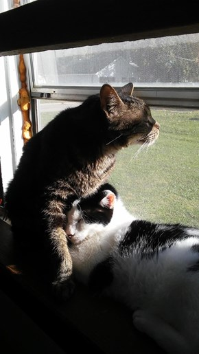 Snuggling Kitties Enjoying the Sunshine