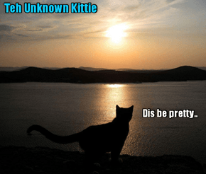 Rio LoLympics: In hims terrific protecshuns ob littl Mischeff from teh evil Rushin spies and minions, teh Unknown Kittie takes a fleeting moment to admire teh beautimous scenery of Rio..