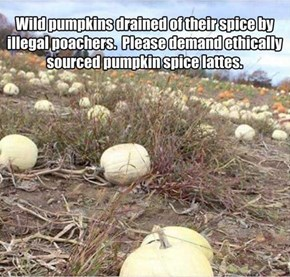 Make Sure You Pumpkin Spice Latte is Fall Trade