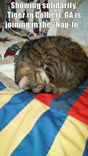 """Showing solidarity, Tiger in Colbert, GA is joining in the """"Nap-In""""."""